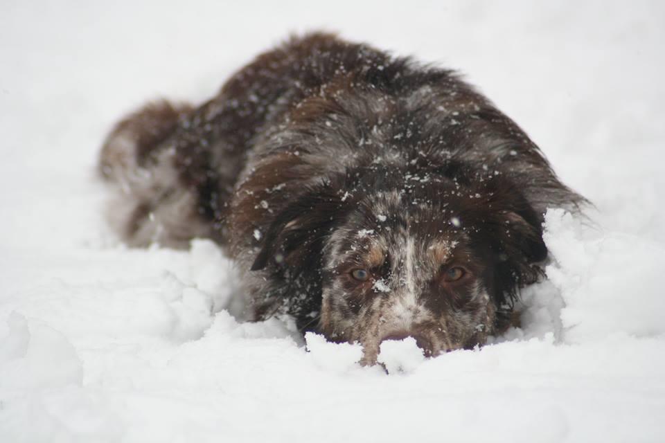 Lennox im Schnee 2014