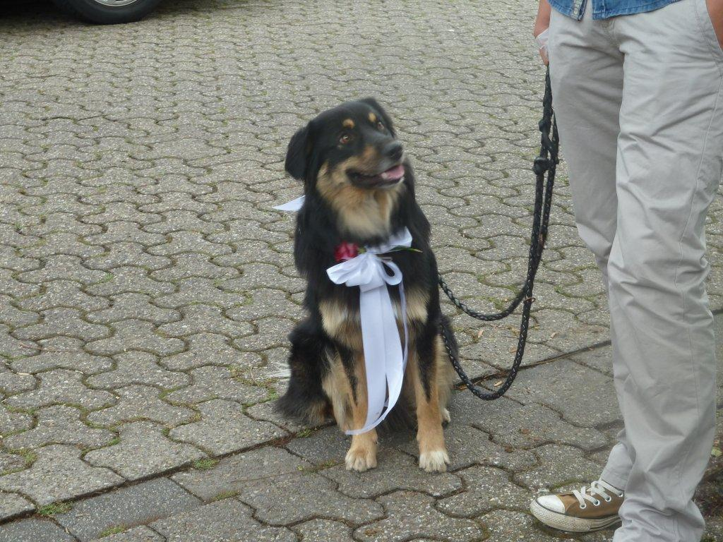 Lennox - Schulhund
