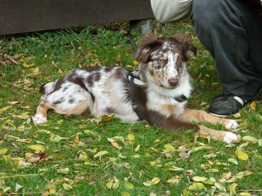 Lennox - 4 Monate
