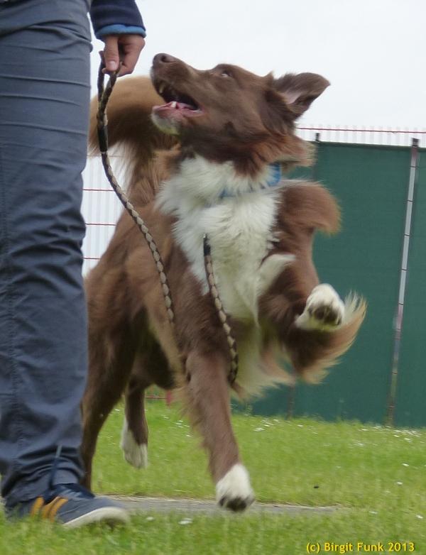 Kobe - Obi-Hund
