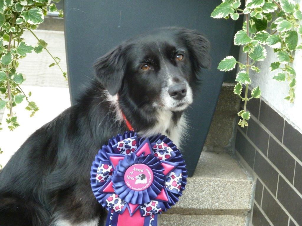 Ashley- Lena 1. Platz AOM Agility