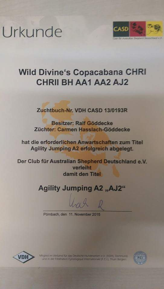 Agility Jumping A 2 Titel Cate