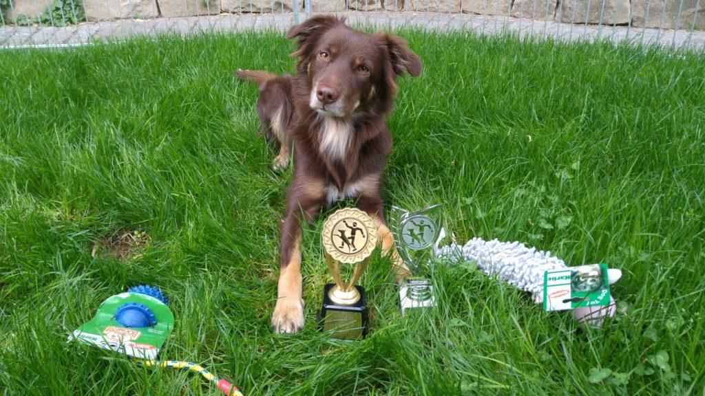 Agility -Turnier Bochum: Joesie schafft 4 Nuller und 4 Platzierungen