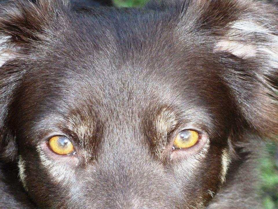 Amber eyes of Joesie